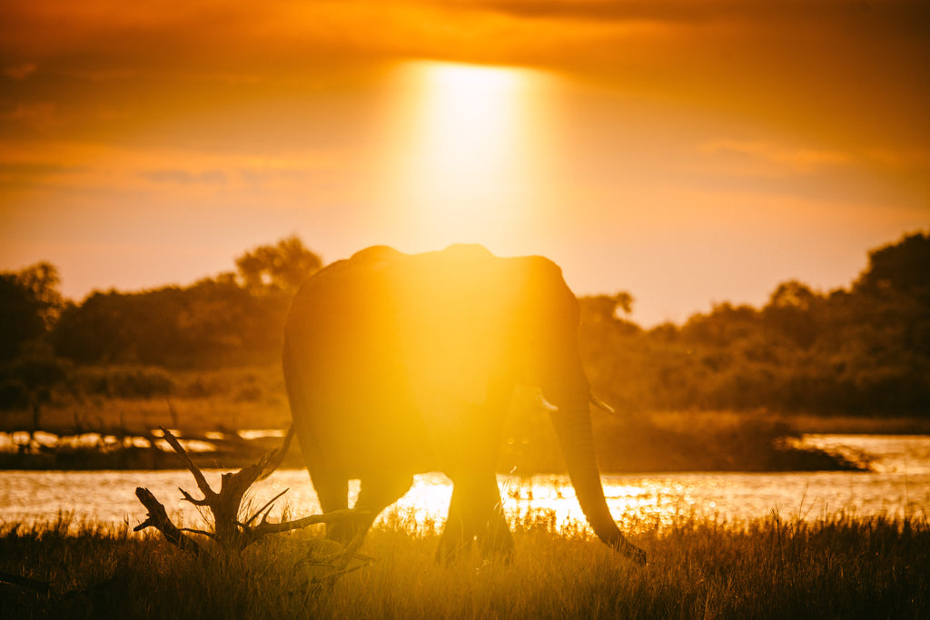 Philip Bloom • GOD RAYS ON AN ELEPHANT