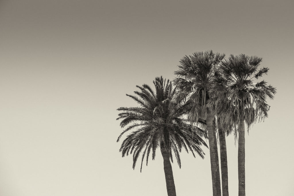 Michael Stahlschmidt • 4 PALM TREES ON THE RIGHT SIDE • 2016