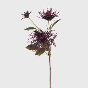 Purple Spider Mum Stem