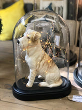 dog Glass Dome | Cloche Glass