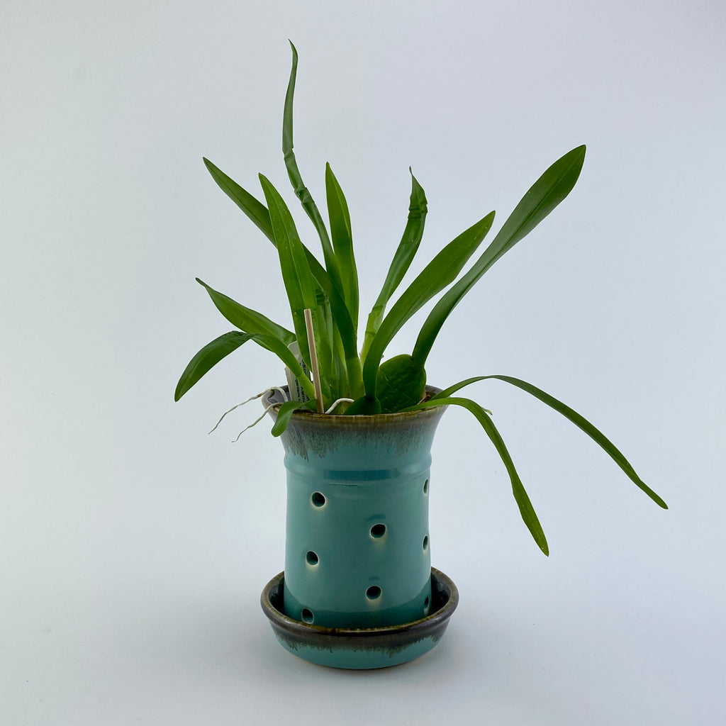 Orchid Pot (Small)