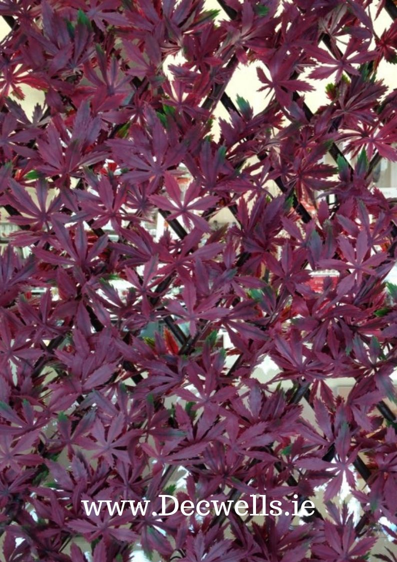 "Artificial Hedge – 2m x 1m ""Red Acer"""