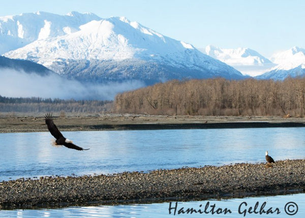 Chilkat Valley Metal Print