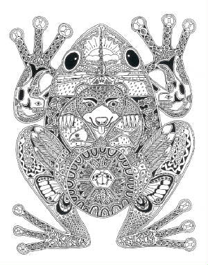 Frog Stamp by Sue Coccia