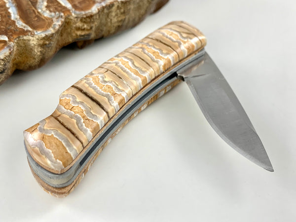 Alumni Buck Knife with Mammoth Tooth