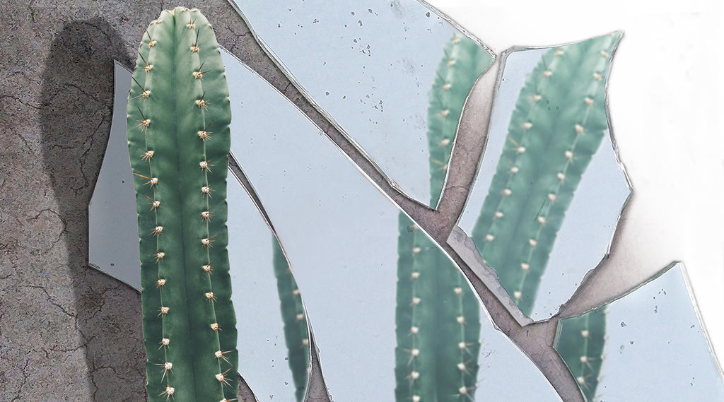 cactus and reflection in a broken mirror