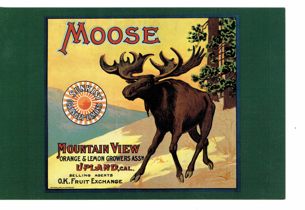 ADVERT Moose Orange and Lemon Growers Re-pro