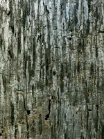 Cork Wallpaper (Eucalyptus Green) - C7