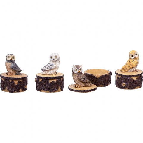 Owl Treasure Box