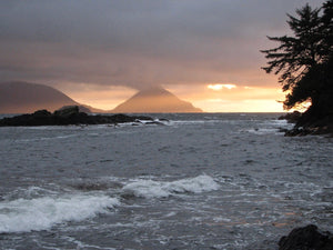 Haida Gwaii Islandwise Cone Head west coast mist