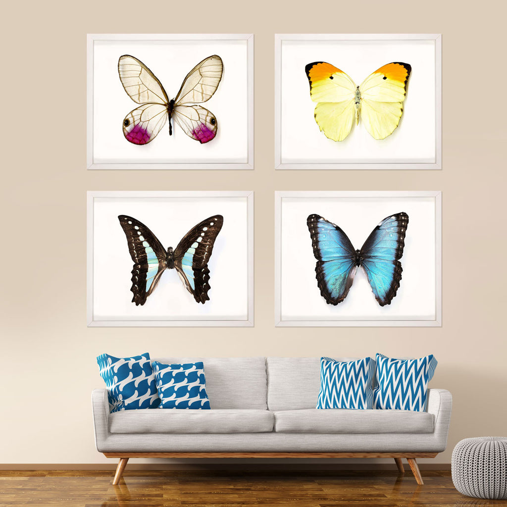 Butterfly Photographs