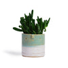 Atelier Stella Small Pot Turquoise and White - RUME