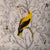 Timorous Beasties Golden Oriole