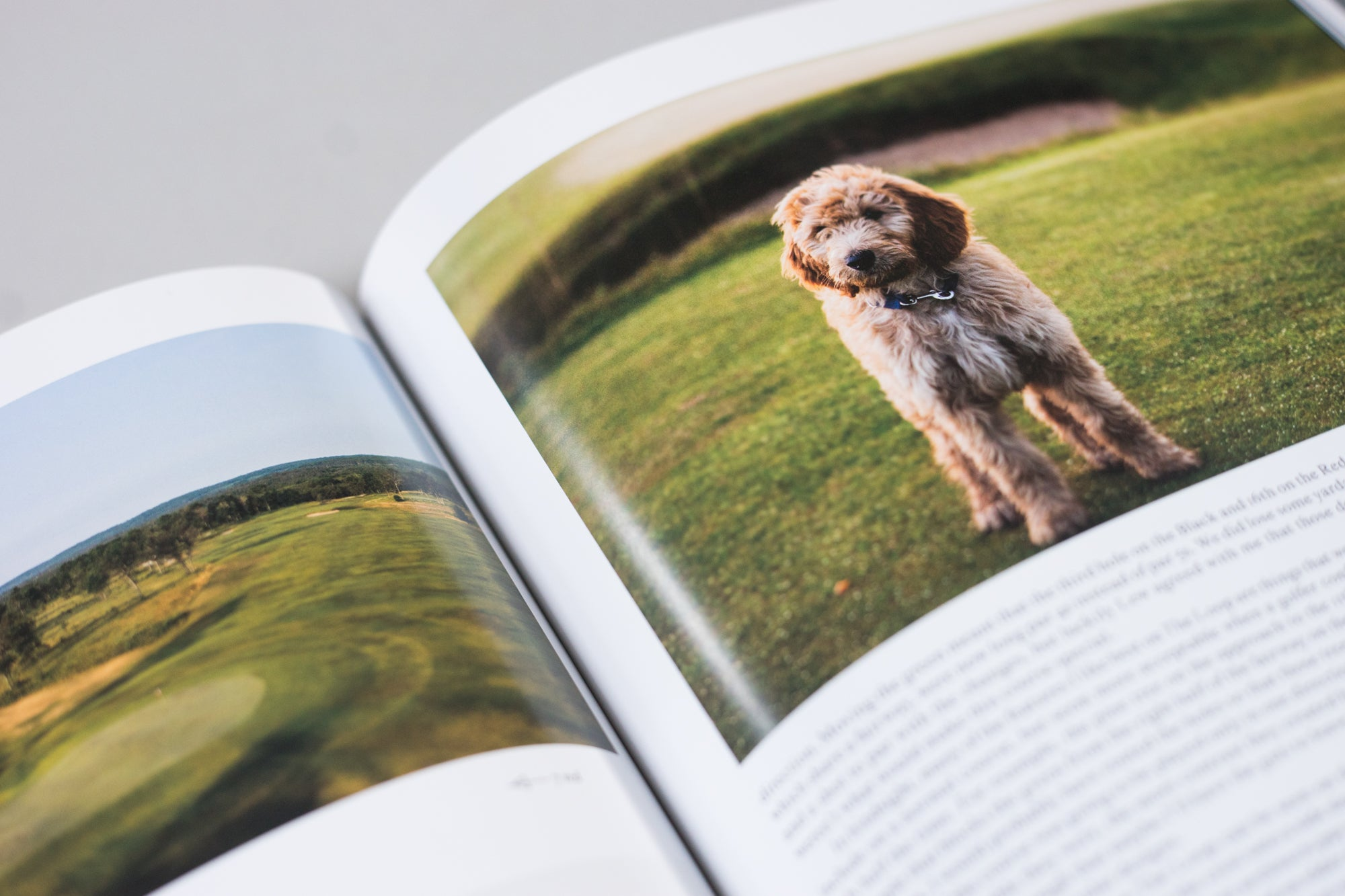 A photo of a dog on a golf course from The Golfer's Journal Issue 6