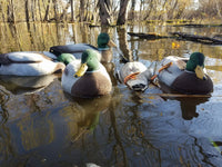 Mallard Head Decoy Flocking Kit