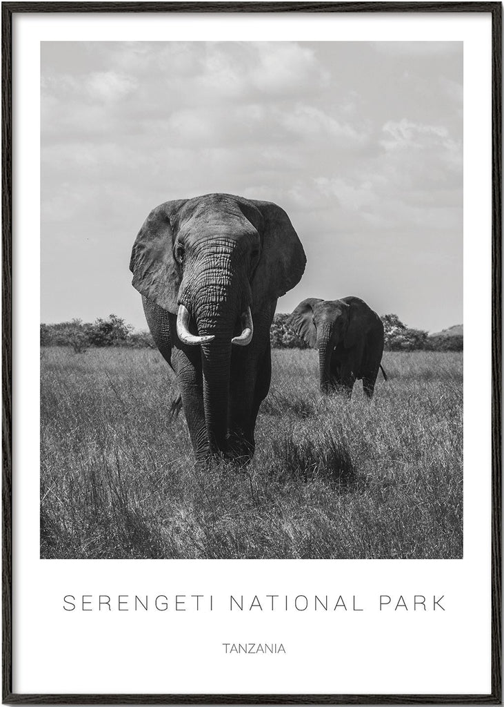 Elephants in Serengeti