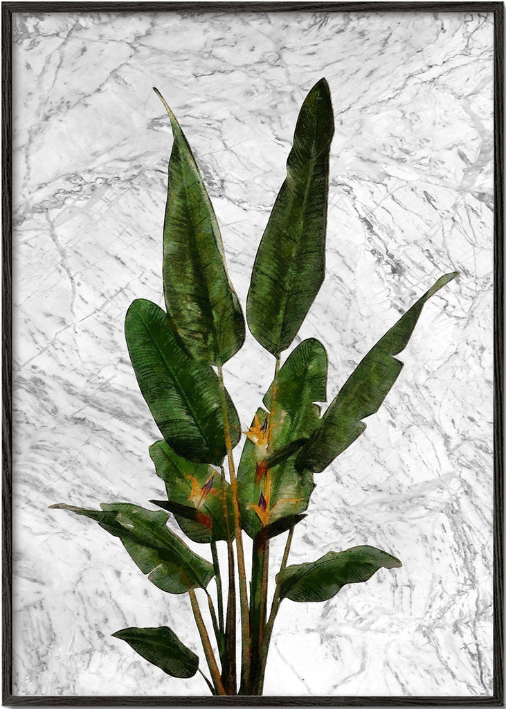 Bird of paradise plant on white marble