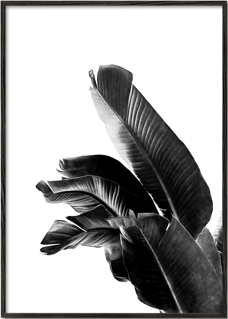 Bird of Paradise Plant Black and White 01
