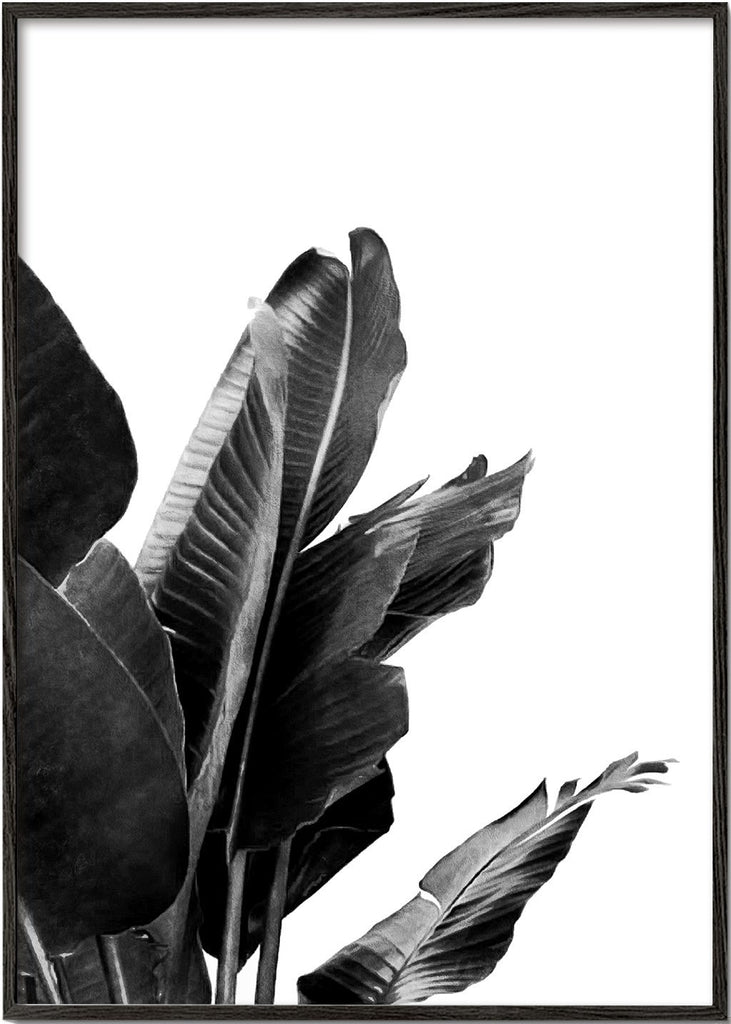 Bird of Paradise Plant Black and White 02