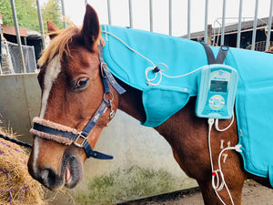 Bio-magnetic session for horses
