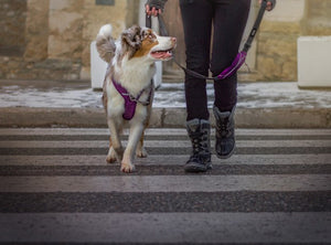 Urban Trail™ Leash