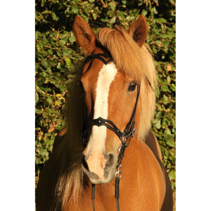 Decorative noseband