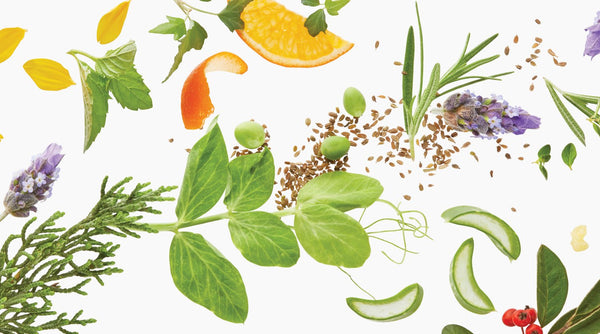 Botanicals Explained + Why They are Important for Your Skin