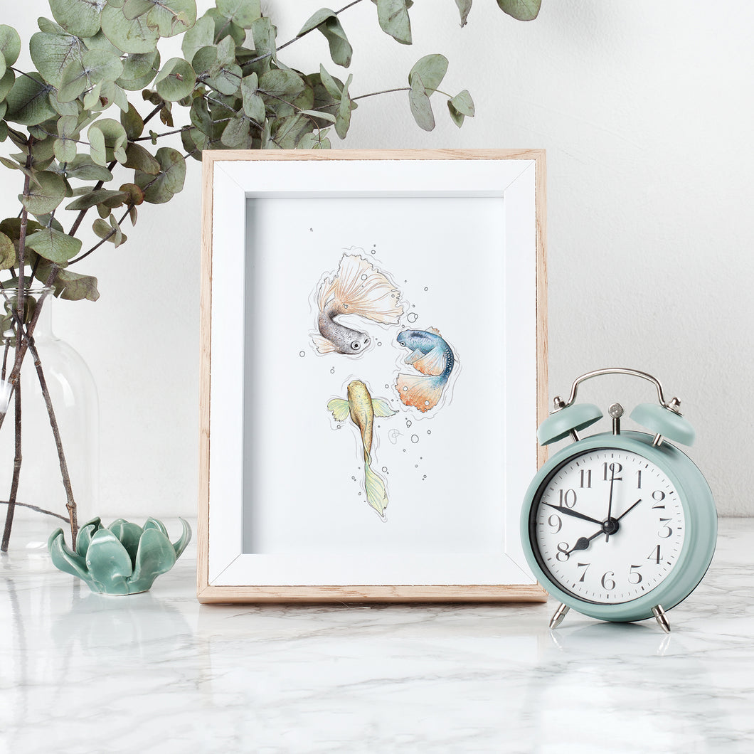 Guppy Gang fish watercolour Imperium Illustrations framed archival print