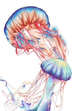 Load image into Gallery viewer, Jellyfish – Art Print