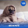 IBS in Dogs and Cats