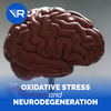 This Is How Oxidative Stress and Inflammation Lead to Neurodegeneration