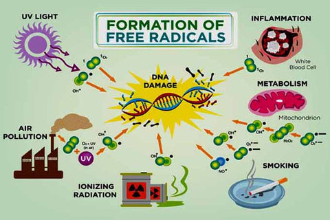 How are free radicals formed?