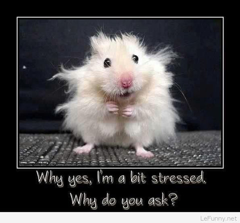 Stressed Out Mice