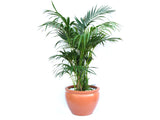 Indoor Plant and Pot Promotion Set