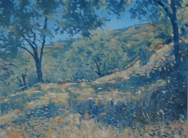 Allbrook Almond trees,sheep, Southern Spain. Meadow under intense sunlight