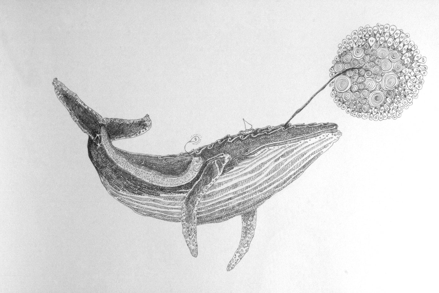 Humpback whale drawing small