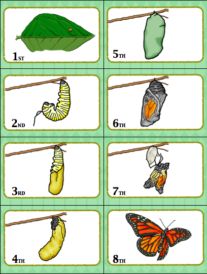 Have a blast learning the butterfly life cycle with this fun butterfly life cycle sequencing card game. Your students will love this!