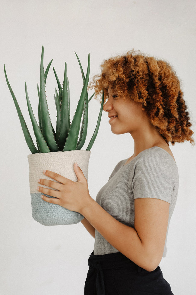 Hero Ingredient: Aloe