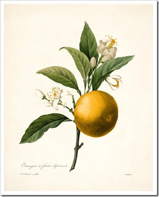 Hero Ingredient: Neroli
