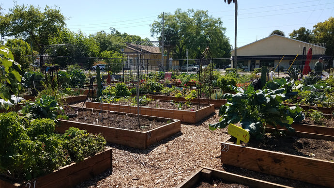 Life's Beauty: Community Garden