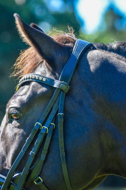 Tota Comfort System Montauk Double Bridle