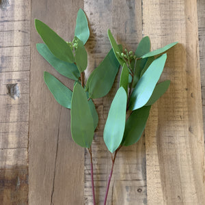 Eucalyptus Narrow Leaf