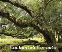 Load image into Gallery viewer, Magical Places Of Britain Book - Enchanted Forests - Viking Dragon Books