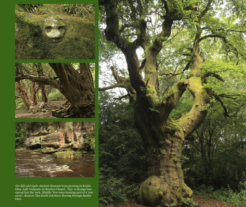 Magical Places Of Britain Book - Ancient Trees - Viking Dragon Books
