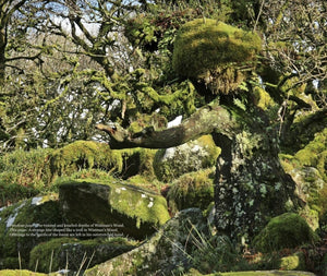Magical Places Of Britain Book - Wistman's Wood - Viking Dragon Books
