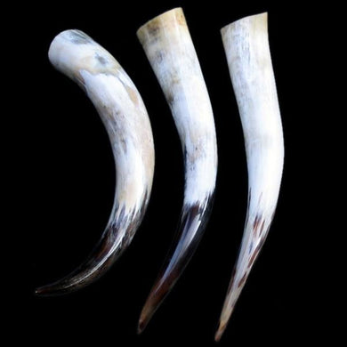 Large Polished Drinking Horn - Viking Drinking Horns