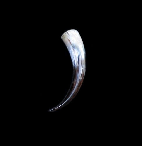 Small Polished Drinking Horn - Horn Only - Viking Drinking Horns