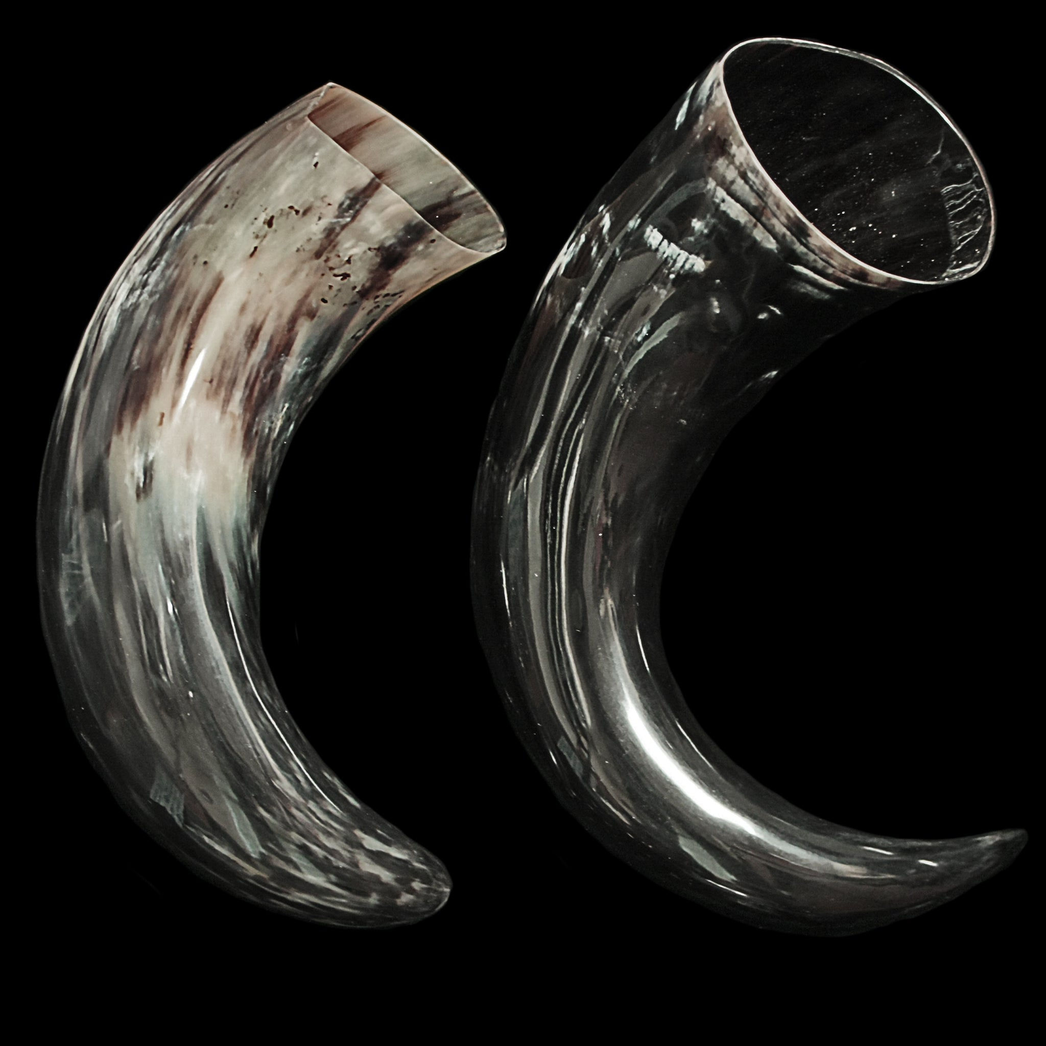 Large Polished Viking Drinking Ox Horn