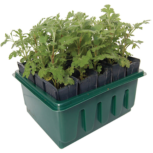 Compact Rootrainer Propagator with 24 plugs with a depth of 8 cm