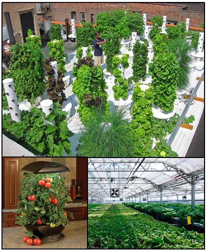 Examples of hydroponics: (clockwise from top) rooftop vertical hydroponics, commercial- scale hydroponics, kitchen-top hydroponics